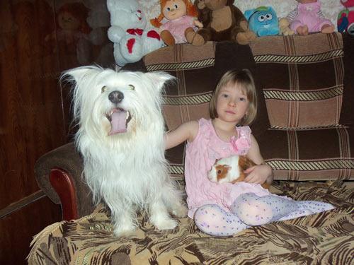 Шпилева Надя и ее друзья - морская свинка Шуня и пес Бим: В моих планах есть и котенок…