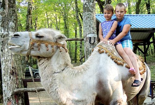 Взрослые люди Верхом на верблюде.