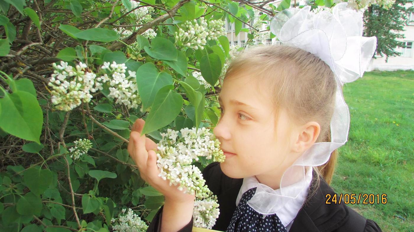 """№16 Кондрашова Мирослава. """"Ароматная сирень""""."""